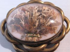 Weird Victorian brooch with dried seaweed and pearls