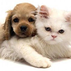 #animais #aos #protecao #protecao aos animais