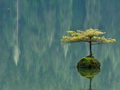 Tree, rock, lake - Zen