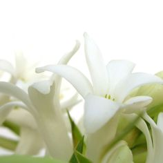 Tuberose   A native of Mexico, the tuberose has a very strong, heady scent, so small quantities of this flower go a long way. Its white, tru...