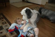 Best Friends For Life - Babies And Their Dogs