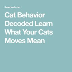 Cat Behavior Decoded Learn What Your Cats Moves Mean