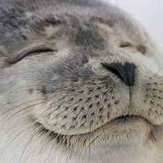 Seal of happiness..