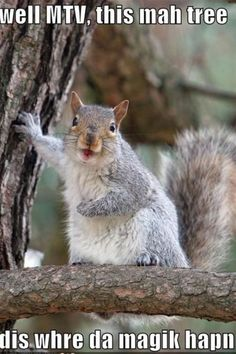 I have a weird obsession with squirrels