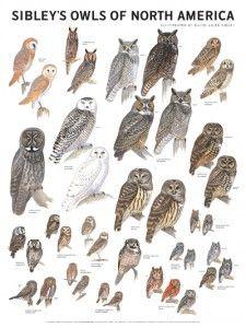 100901_owls_fc_01.indd