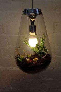 cactus garden lightbulb