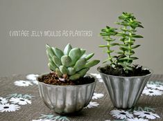 Jelly mould succulents, what a great idea for the baker/gardner!