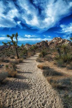 #Joshua Tree National Park in California