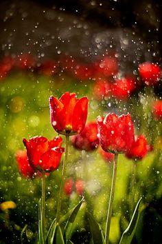 under rain by Владимир Мищик**