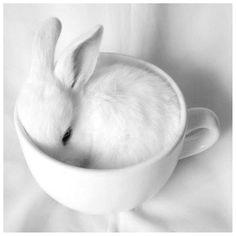 White bunny #pets #white #rabbits