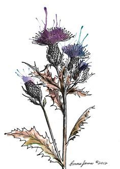 vintage thistle drawing - Google Search