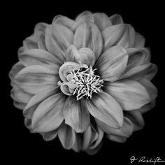 steel flower | Flickr - Photo Sharing!