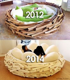 nest bed evolution IIHIH