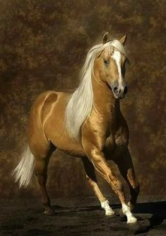 Previous pinner said: My last horse was a big, beautiful Palomino like this one. My Dad traded a 1962 Buick Skylark for her. Thanks, Pops! Palomino, Appaloosa, Most Beautiful Animals, Beautiful Horses, Beautiful Creatures, Beautiful Gorgeous, Horse Photos, Horse Pictures, Majestic Horse