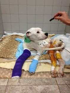 FRECKLES - starved and dragged behind vehicle, donation request for medical care and rehab. Please repin.