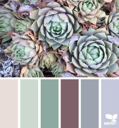 NATURE MADE { succulent hues } September 17 2014