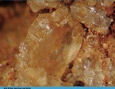 Beryllonite, NaBePO4, G.F. Smith Mine, Newport, NH Specimen Size: 1.75 mm