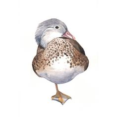 Duck painting bird art nature wildlife Print of by Splodgepodge