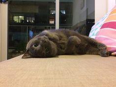 Sooty Cat | Pawshake