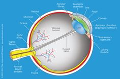 Image result for label the eye diagram