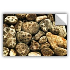 ArtWall Kevin Calkins Petoskey Stone Collage ArtAppealz Removable Wall Art, Size: 12 x 18, Black