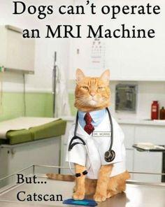 This photo about: Purr Crap Cat Joke Of The Day Slapwank Crap Cat Joke Of The Day Funny Memes And Jokes At Slapwank, entitled as Cat jokes meme - ebreezetv Cat Puns, Cat Jokes, Puns Jokes, Memes Humor, Cat Humour, Corny Jokes, Cheesy Jokes, Ecards Humor, Funny Animal Memes