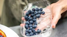 Blueberries, ingredients for berry cheesecake with Robiola or ricotta cheese