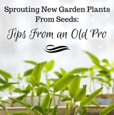 Sprouting New Garden Plants From Seeds Tips From an Old Pro via The Survival Mom