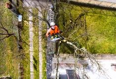 The Advantage of Working With A Professional Tree Removal Business