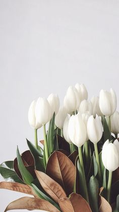 White Tulips, Tulips Flowers, My Flower, Planting Flowers, Beautiful Flowers, Flowers Garden, White Tulip Bouquet, Art Flowers, Yellow Roses
