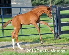 Tales from the Crib: Creator | 2016 Kentucky Derby & Oaks | May 6 and 7, 2016 | Tickets, Events, News