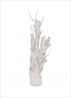 Rachel Goodyear - lopped tree  2006  pencil, biro on paper  15 x 21 cms  private collection