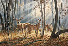 Woodland Splendor Whitetail Deer Wrapped Canvas Art by Rosemary Millette Wildlife Paintings, Wildlife Art, Animal Paintings, Deer Photos, Deer Pictures, Wild Life, Hunting Art, Turkey Hunting, Deer Art