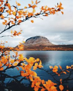 Autumn colors in Finnish Lapland - Nature/Landscape Pictures Lappland, Landscape Pictures, Nature Pictures, National Photography, Nature Photography, Finland Travel, Our Planet Earth, Outdoor Life, Landscape Photographers