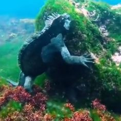 Ocean Photography, Animal Photography, Animal Quotes, Animal Memes, Animals Beautiful, Cute Animals, Lizard Species, Rare Species, Ocean Creatures