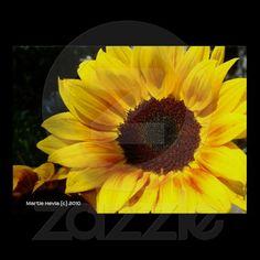 Sunflower | Photography by Martie Hevia http://www.zazzle.com/mhevia*/