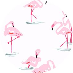 Jane Dixon for Andover Fabrics, Flamingos White
