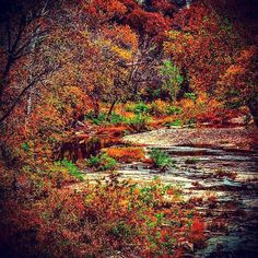 Here's a beautiful shot of a creek winding through the woods in #Branson. Thanks for sharing this with us, @shoprgrl_84! #ExploreBranson #Fall