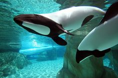 Commerson's Dolphins.    Known for their playful nature and electrifying speed.