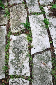 Hometalk :: Placing Irish Moss, Thyme and sedum on a stone stairway. http://in-s…