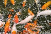 How to Make Your Own Pond Filtration System   eHow