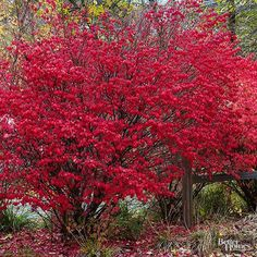 Shrubs for Shady Spots: Sumac, Azalea, Rhodie, Camellia, Kerria, Hydrangea, Pieris, Summersweet, Serviceberry, Mountain Laurel, Daphne.  Lower front yard and along north front fence!