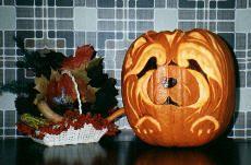 chow pumpkin