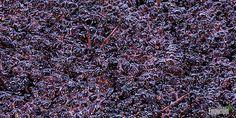 Ultrassons para reduzir o tempo de maturação nos vinhos tintos