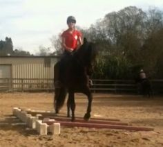 Riding Over Raised Poles: A simple exercise will help develop your horse's strength and improve his stride.