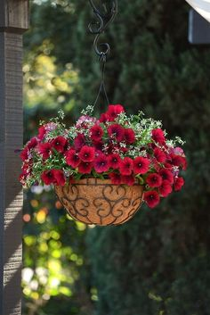 How to Keep Petunias Beautiful in a Hanging Basket ~ Garden Down South Petunia Hanging Baskets, Hanging Basket Garden, Plants For Hanging Baskets, Hanging Plants Outdoor, Outdoor Decor, Container Flowers, Flower Planters, Container Plants, Container Gardening