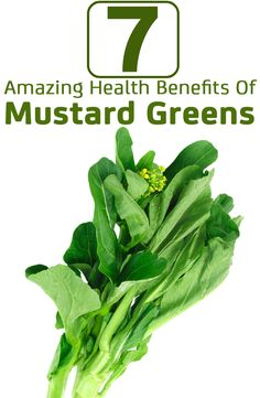 Do you hate to eat greens, then this article just might change your mind! Mustard greens packed with several vital anti-oxidants has amazing health benefits. Health Benefits, Health Tips, Health And Wellness, Ayurveda, Healthy Mind, Healthy Eating, Eating Clean, Dark Green Vegetables, Mustard Greens