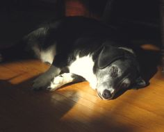 Paisley Dog