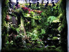 Tropical Paludarium with a beautiful cameleon Aquarium Reptile Decor, Reptile Room, Reptile House, Reptile Cage, Gecko Terrarium, Succulent Terrarium, Vivarium, Aquarium Fish Tank, Planted Aquarium