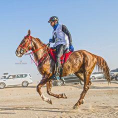 2/14/15 President's Cup Endurance Race PHOTO:  khalidalshafar